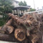 不要品の木を処分