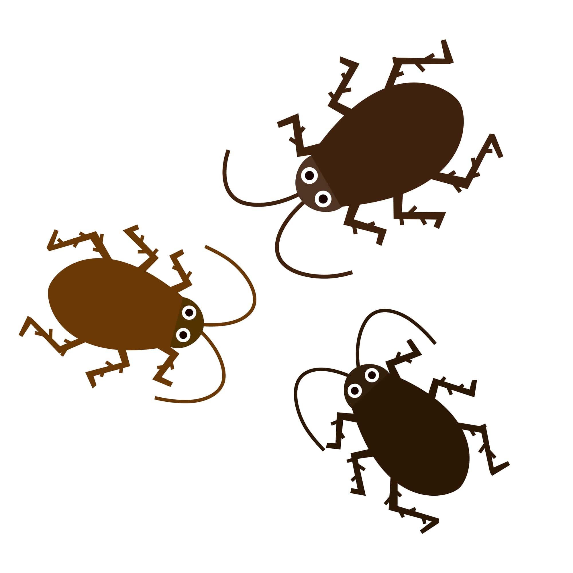 害虫イメージ