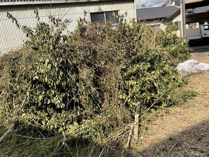 【回収実績】福岡市南区で剪定した木・枝・草などを回収しました