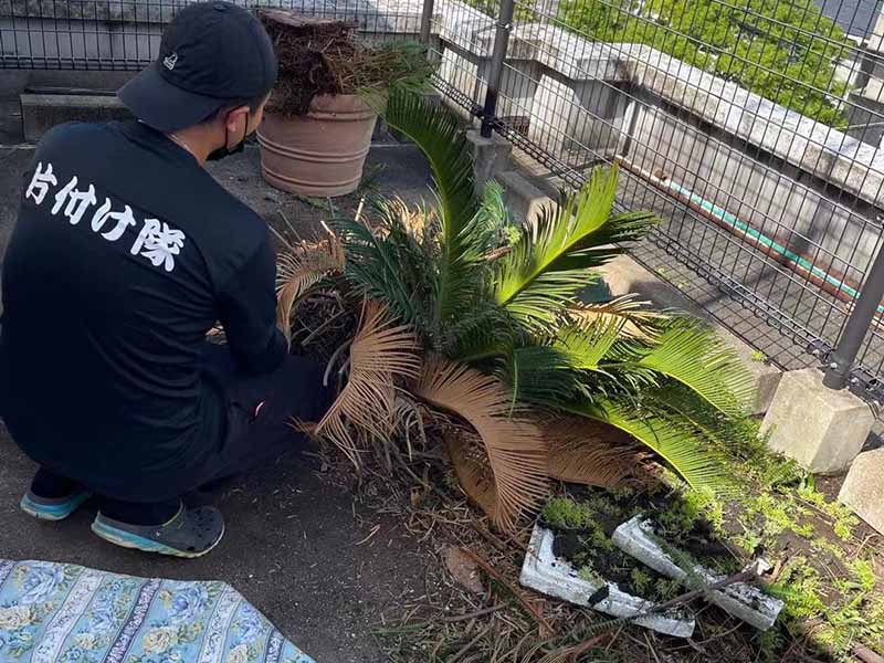 福岡で屋上の草 プランタン 植木の処分、片付けは福岡片付け隊へ【片付け実績】